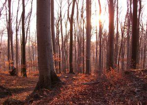 fotos-bis-012008-394-laubbaeume-ret